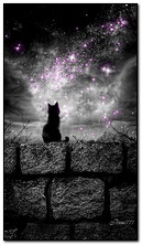 Black Cat And The Stars