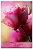 Rosa rosa para ti