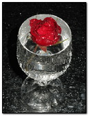 Red Rose At Glass
