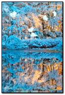 冬の自然の美しさ