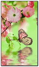 फ्लाइंग फुलपाखरू