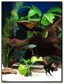 Aquarium 240x320