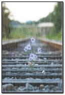 Kwiaty w deszczu