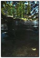 Petit cours d'eau