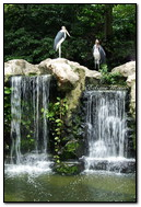 Storks At The Waterfall
