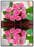 Roses Reflet