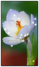 Animuj biały kwiat