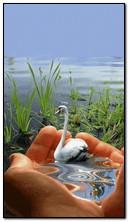 natura dell'acqua