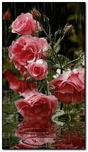 الزهور في المطر