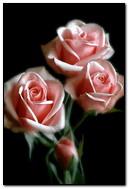 الورود المتحركة