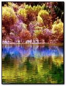 Forest Reflet