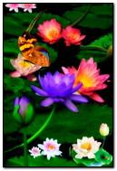 Papillon sur Lily