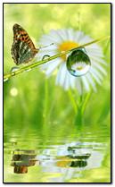 तितली और ड्रॉप