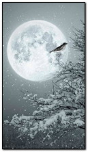 Winter Mond