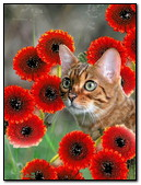 Cat Among The Flowers