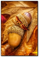 Autumn Acorns And Batterflay