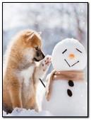 في الشتاء