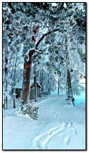 zimowy czas