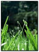 Rain On Grass