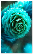 Grüne Rose