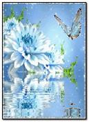 फ्लॉवर आणि फुलपाखरू