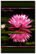 Dragonfly On A Pink Lotus