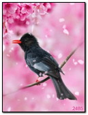 طائر صغير
