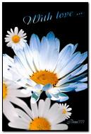 Hoa chamomile