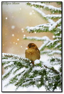 Bird In Winter Forest