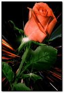 Animated Rose