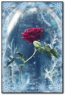 Rose In The Falling Snow