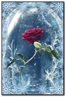 Rose dans la neige qui tombe