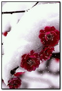 Flowers At Snow