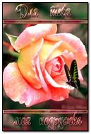 Roses pour petite amie