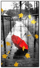 Дождь осень