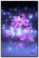 Butterfly pada bunga