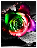 Multi Colored Rose