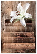 White Lily On The Books