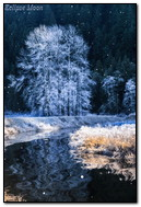 The River In Winter Forest