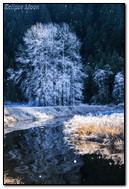 河在冬天森林里