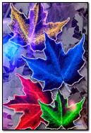 彩色的枫叶