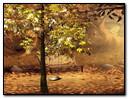 Autumnal Park 320x240