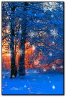 A beleza da natureza no inverno