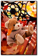 Teddy d'automne