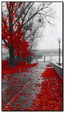 الخريف المطر