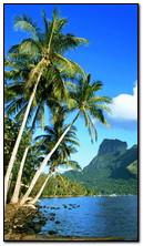 Vue tropique