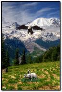 Animated Hawk