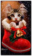 圣诞节小猫