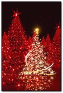 Pokok-pokok Krismas