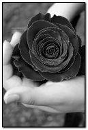 काला गुलाब
